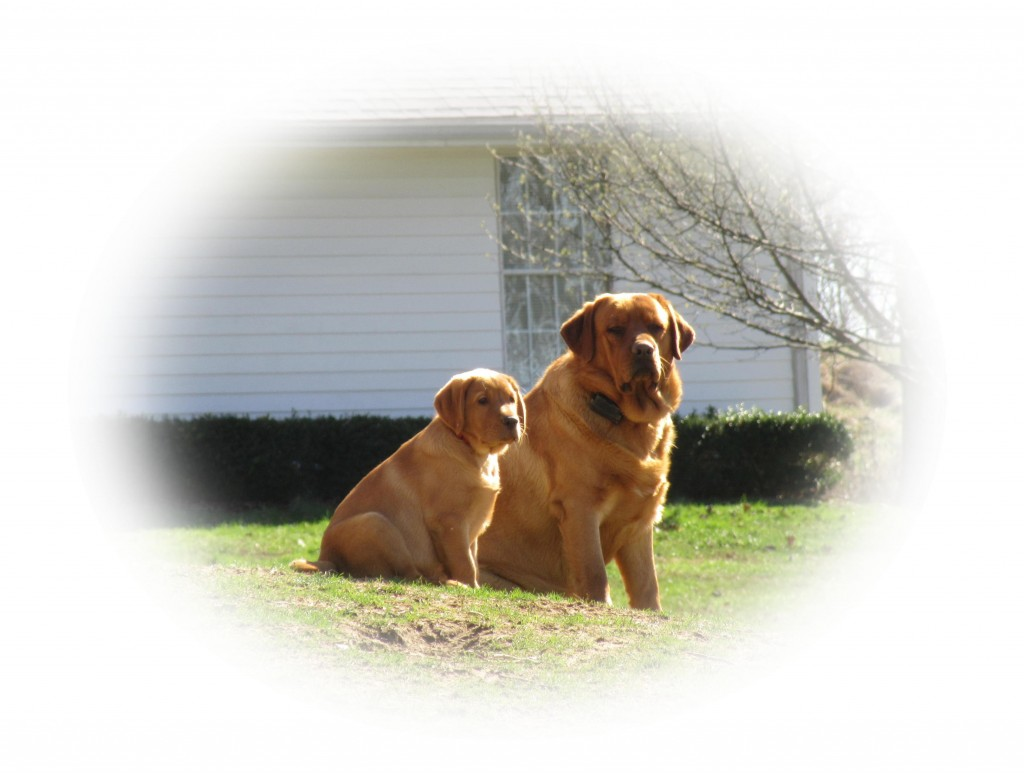 March 3 Rocky and Crimson (2)